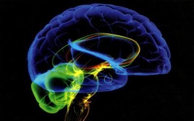 brain-works-image 2