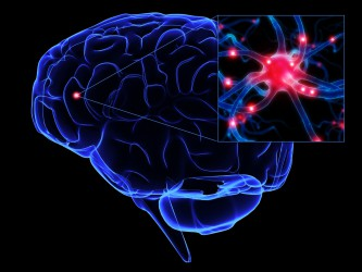 Brain and Neurons