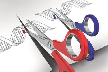 CRISPR Gene Editing License 2