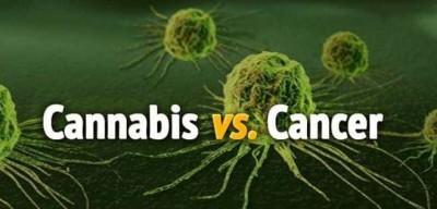 Cannabis Oil Cures Cancer, How to Make Cannabis Oil